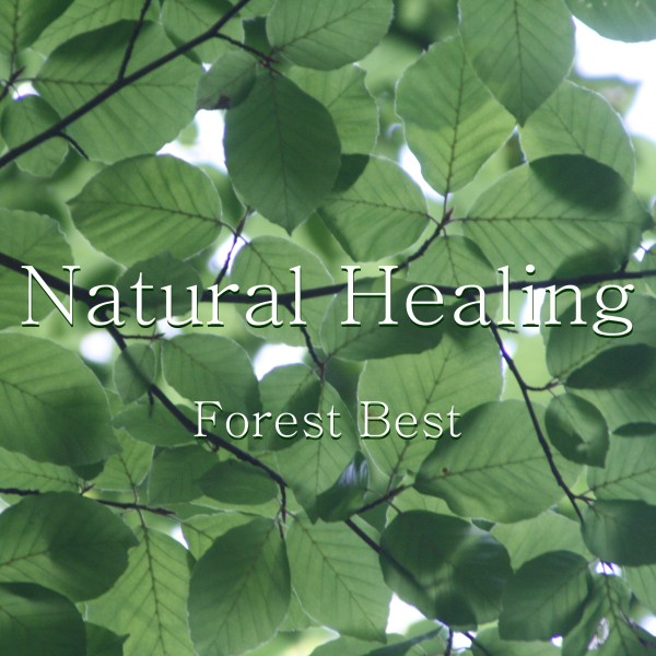 Natural Healing Forest Best